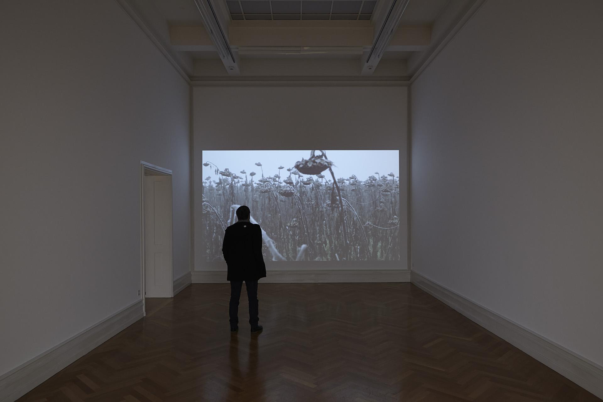 Video Sonnenblumen | Kunsthalle Bern | Cantonale Berne Jura | 2014